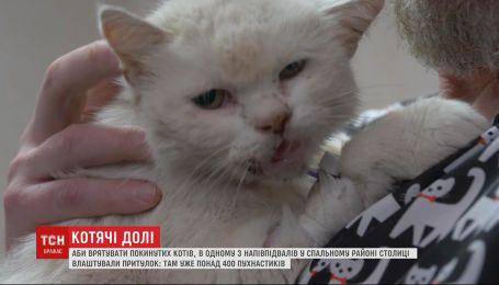Хто допомагає пораненим та знедоленим котикам і що на них чекає далі