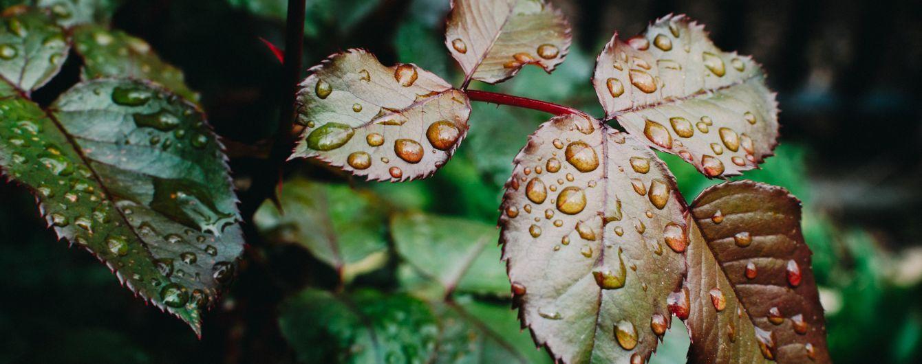 Погода на понедельник: в Украине обещают дожди с грозами и 33-градусную жару