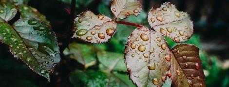 Погода на понеділок: в Україні обіцяють дощі з грозами та 33-градусну спеку