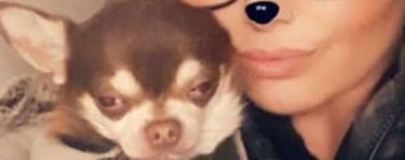 В английском городе чайка украла собаку