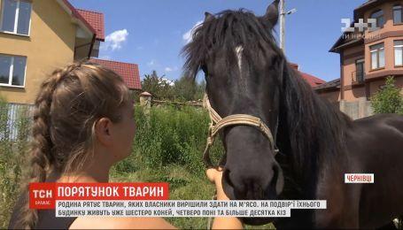 Семья волонтеров в Черновцах выкупает лошадей, которых владельцы решили отдать на убой
