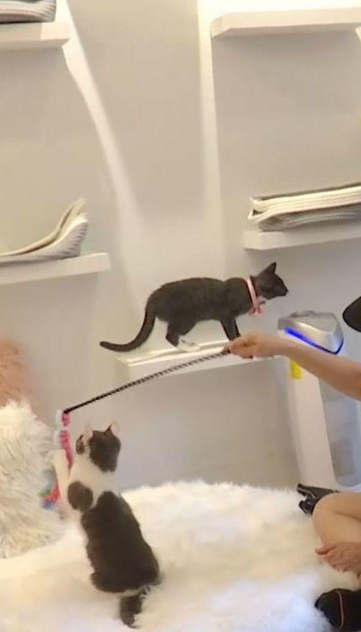 Американские заведения придумали эффективный способ поиска нового дома для бездомных котят