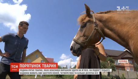 У Чернівцях родина рятує коней, яких власники вирішили здати на м'ясо