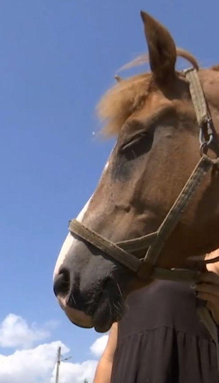 В Черновцах семья спасает лошадей, которых владельцы решили сдать на м'ясо