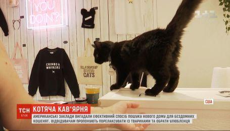В США открыли кафе, где можно выбрать себе котенка