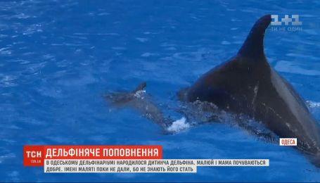 В Одесі народилося дитинча дельфіна