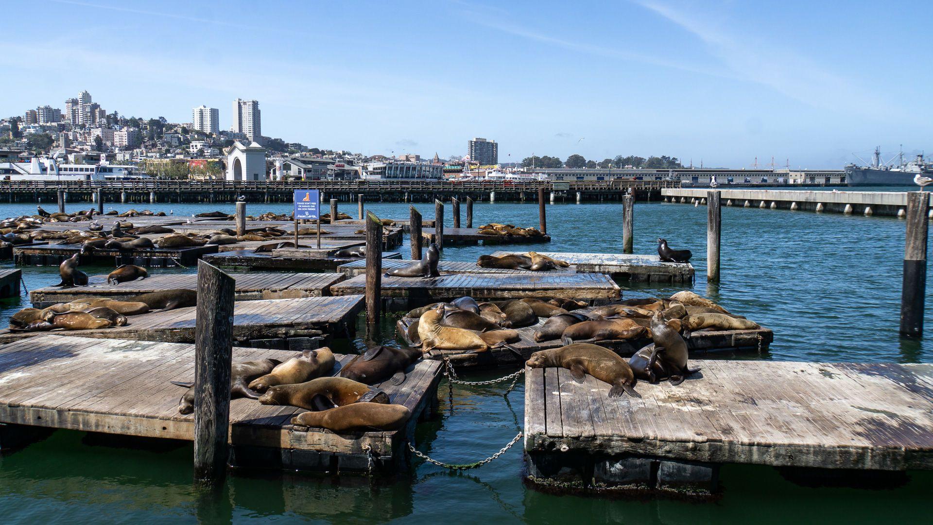 Сан-Франциско, США, для блогів_8