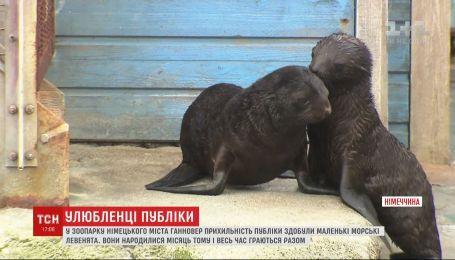 Двое морских львят радуют посетителей немецкого зоопарка