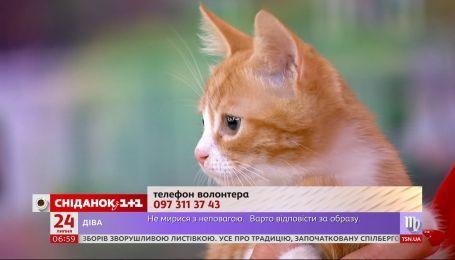 Чотиримісячних котенят підкинули у мішку на територію притулку «Сіріус»