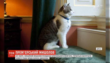 Британский правительственный кот Ларри готовится встречать нового премьера