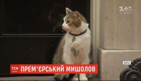 Официальный мышелов резиденции британского премьера кот Ларри встретит уже третьего хозяина