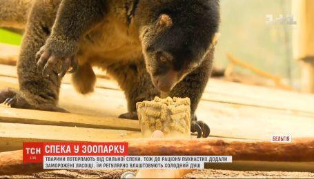 Обитателей зоопарка в Бельгии кормят мороженым с фруктами и рыбьим смузи