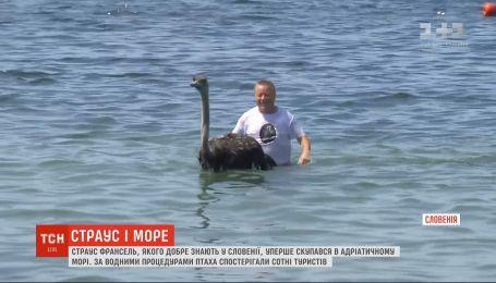 Страус Франсель, которого хорошо знают в Словении, впервые искупался в Адриатическом море