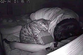 Мужчина установил камеру и узнал, что задыхался во сне из-за коварного кота