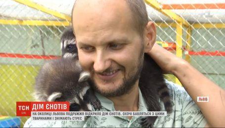Очереди и платный вход: на окраине Львова молодые супруги открыли Дом енотов