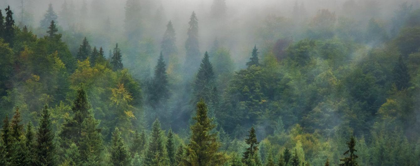 У Закарпатті 10-річний хлопчик сам добу провів у лісі, бо заблукав