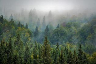 В Закарпатье 10-летний мальчик сам сутки провел в лесу, потому что заблудился