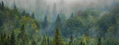 В Украине создали онлайн-карту вырубки лесов