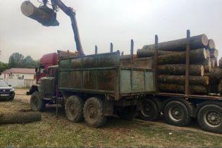 На Харьковщине СБУшники разоблачили масштабные хищения леса из государственных лесничеств