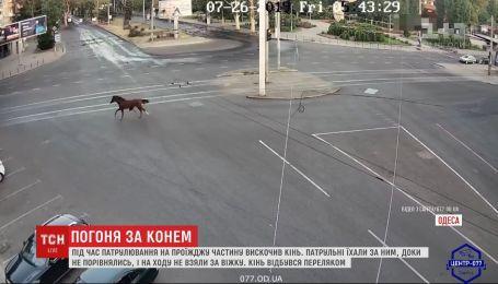 Испуганный конь едва не стал причиной ДТП в Одессе