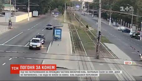 Одесские патрульные устроили погоню за испуганным конем
