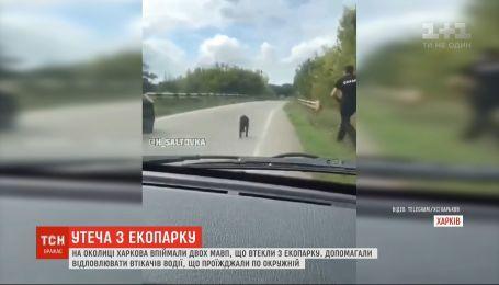 На окраине Харькова ловили двух обезьян, сбежавших из экопарка