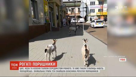 Рогатые нарушители: козел, коза и козленок гуляют по центру города Ровно