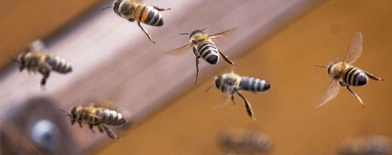Аллергия на укусы насекомых: этим летом уже погибли несколько украинцев