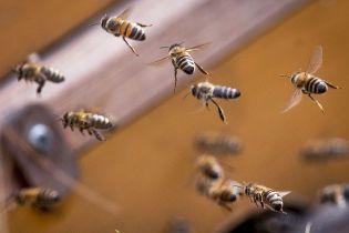 Алергія на укуси комах: цього літа вже загинули кілька українців