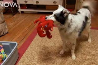 Найрозумніший у світі собака помер у США