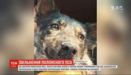 """Собаку с захваченного российскими силовиками буксира """"Яны-Капу"""" вернули в Украину"""