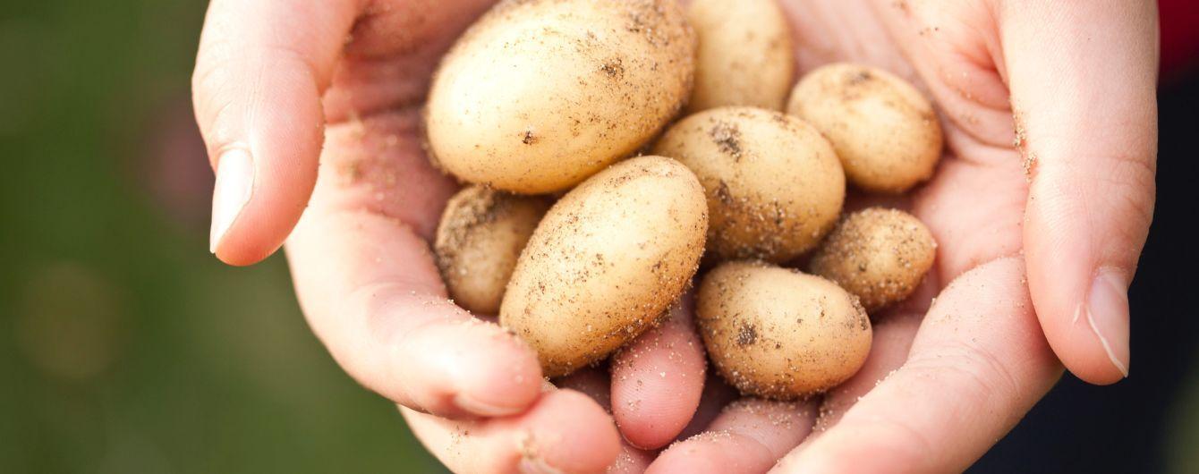 В Україні здешевшала картопля