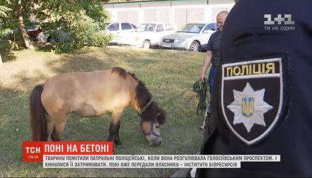 Патрульные поймали пони, который бегал по улицам Киева