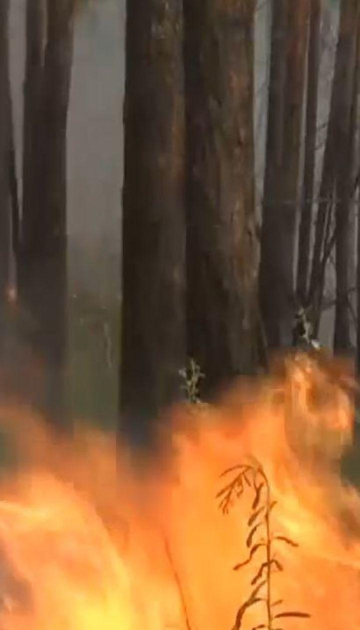 Трамп запропонував Путіну допомогти загасити лісові пожежі у Сибіру