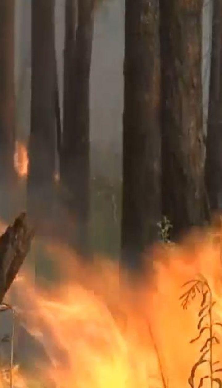 Трамп предложил Путину помочь потушить лесные пожары в Сибири