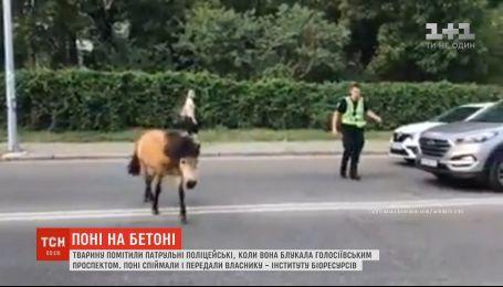 Патрульным в Киеве пришлось ловить сбежавшего пони