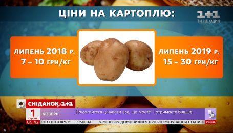 """""""Золотой"""" корнеплод: почему растут цены на картофель"""