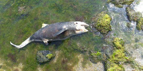 В Одесі на пляж викинуло мертвого дельфіна