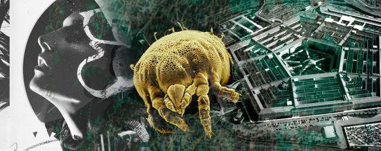 Кліщі – біологічна зброя Холодної війни. Як пов'язані Пентагон та поширення небезпечної хвороби Лайма