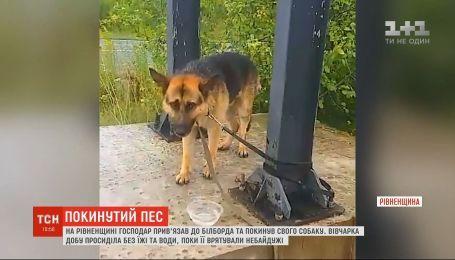 Сутки без воды и пищи: в Ровенской области возле трассы Киев-Чоп хозяин привязал и бросил свою собаку