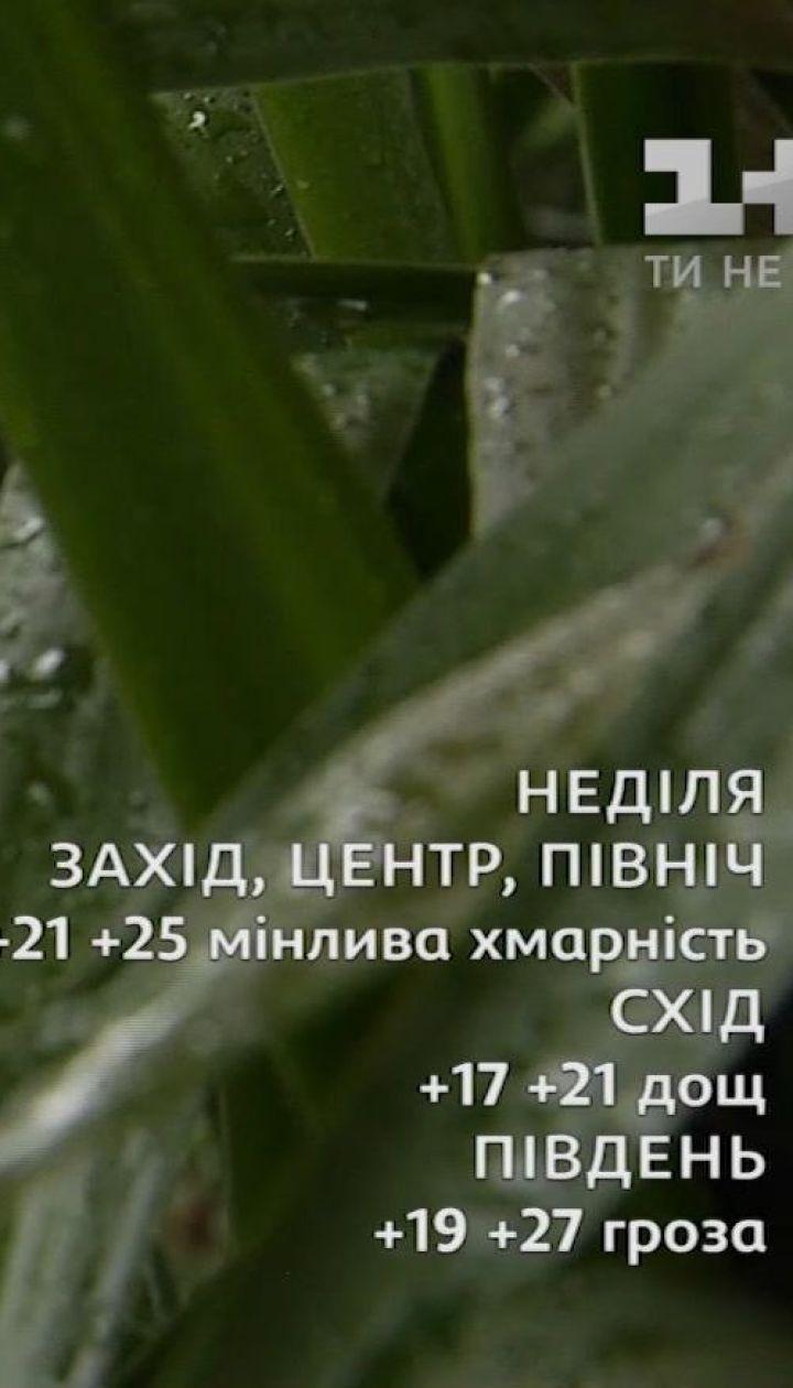 Обзор погоды на первые выходные августа
