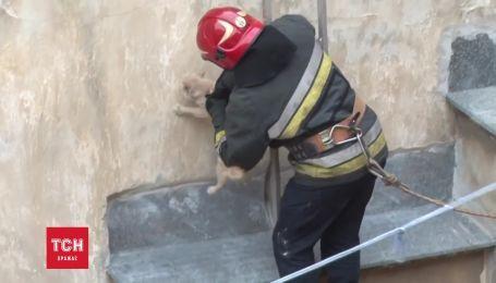 У Львові врятували кота, який застряг на піддашку