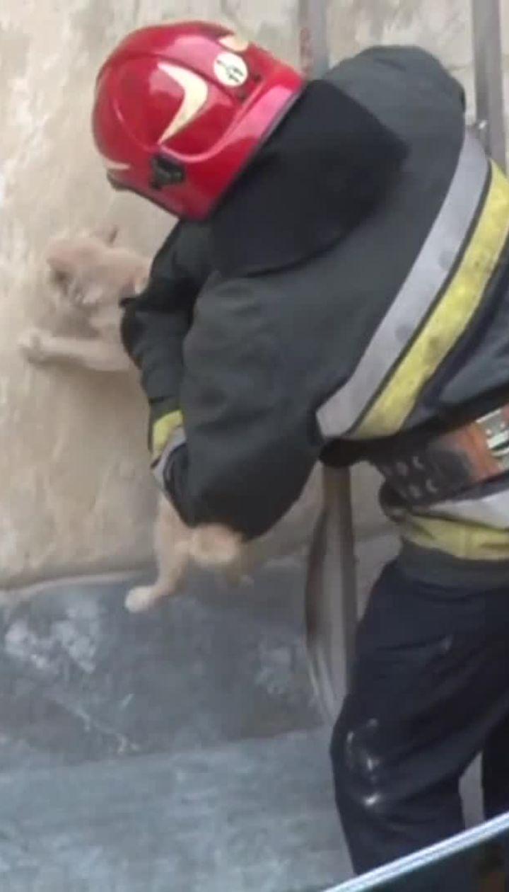 Во Львове спасли кота, застрявшего на карнизе