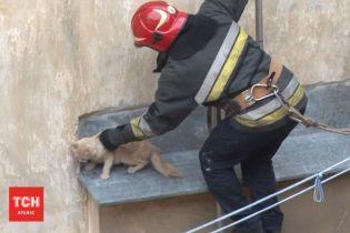 У Львові пожежники врятували рудого кота, який застряг на високому піддашку