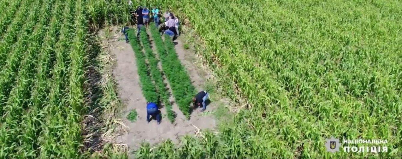 На Буковине сняли с высоты крупнейшую плантацию конопли, обнаруженную за последние годы