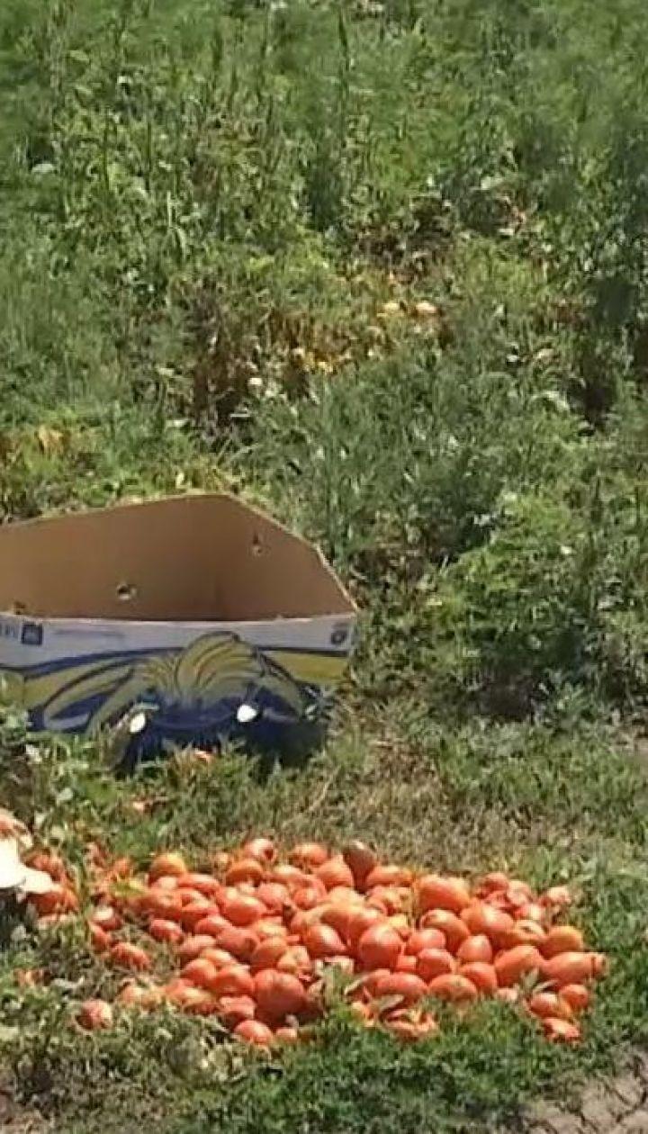 На Миколаївщині син фермера вбив селянина через помідори