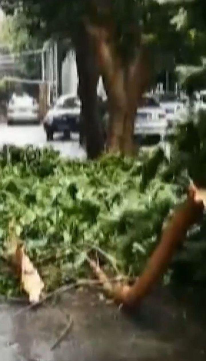 Тайфун Вифа повалил сотни деревьев в азиатском регионе
