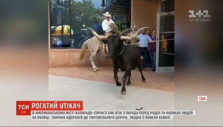Бик утік з параду й увірвався до сповненого людьми торговельного центру в США