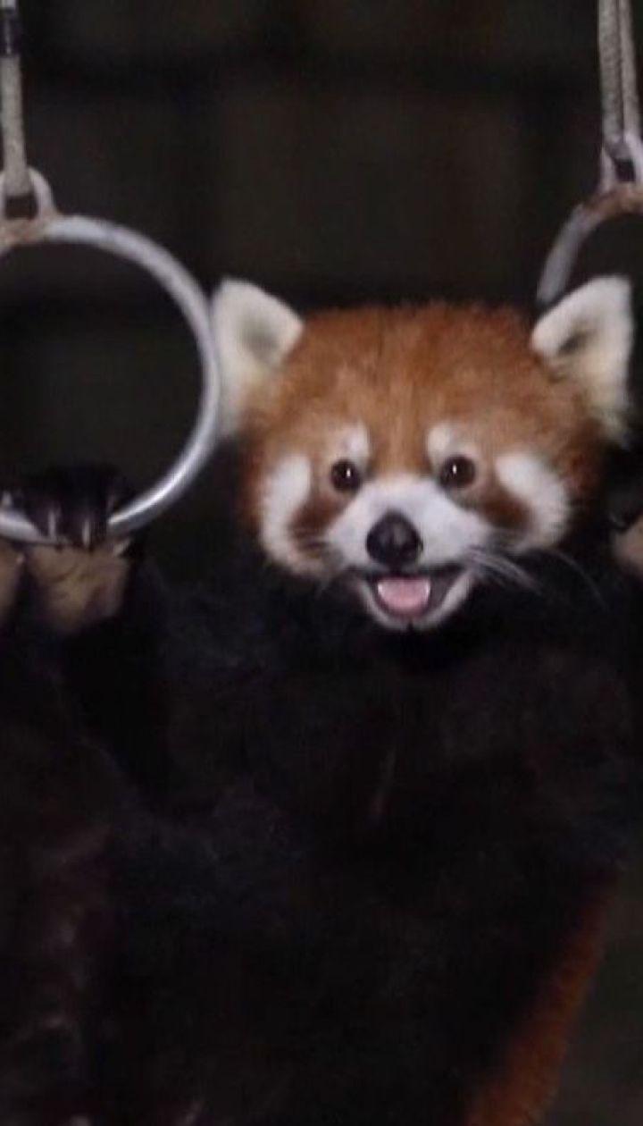 Чтобы увидеть настоящую жизнь диких животных, в китайском зоопарке устраивают ночные экскурсии