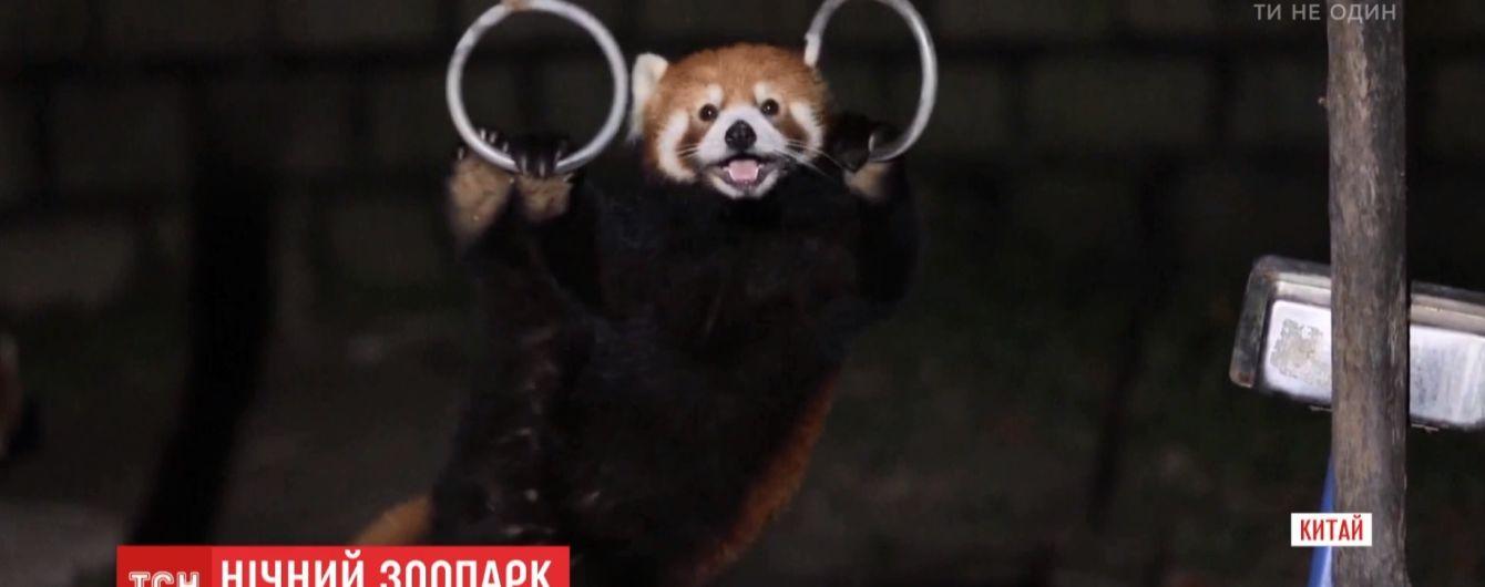 Дикая природа: китайский зоопарк удивил посетителей ночными экскурсиями